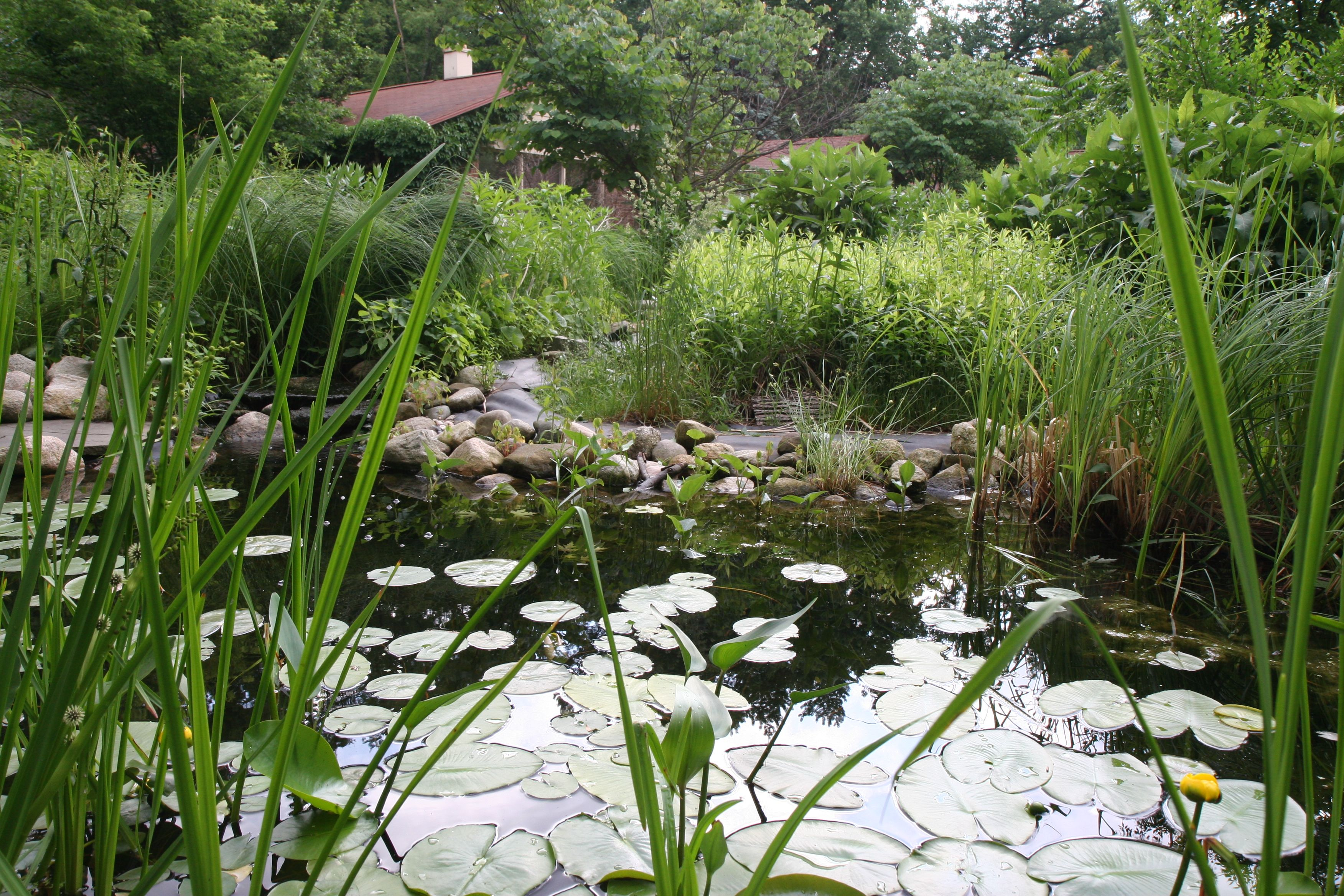 The wilder side of me for Large pond plants